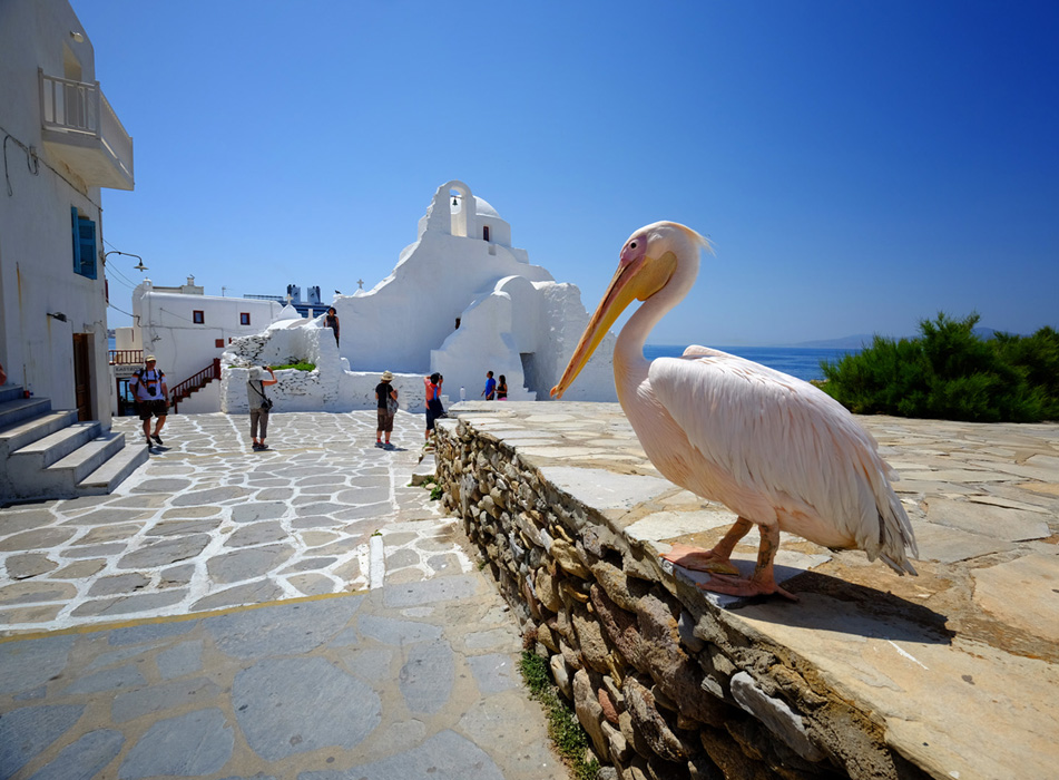 photoblog image Pelican at Mykonos, Greece